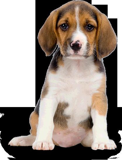 dog-png-22636
